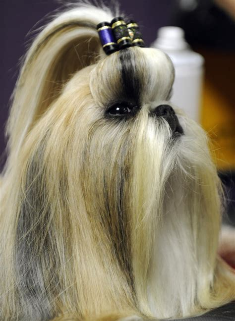 The Bouffant With a Bow   Pictures of Dog Hairstyles